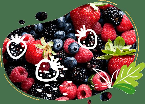 Une forme abstraite avec photo et illustration démontre des fruits rouges biologiques qui vont être transformés en smoothies à l'aide du vélo blender