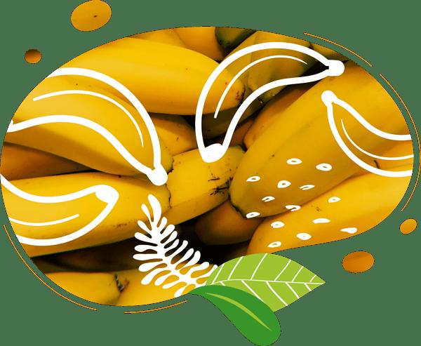 Le smoothie au bon gout de bananes biologiques