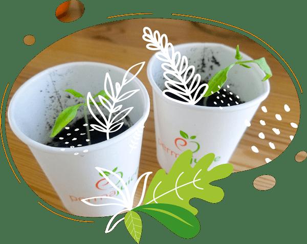 Nos gobelets compostables permettent aux clients de semer une graine pour repartir avec un souvenir.