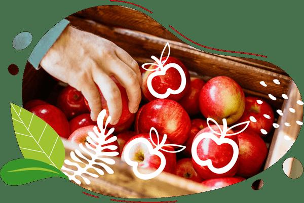 Une main d'homme prend une pomme dans un panier