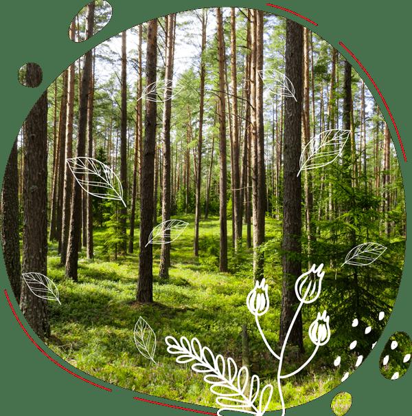 Photo présentant des arbres d'une foret gérée durablement pour protéger la planète