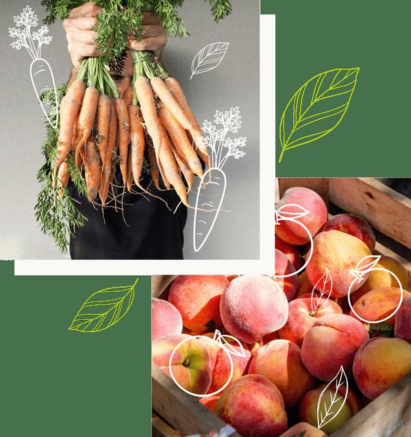 producteur de légumes et fruits biologiques à mortain sud manche